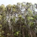 Los bosques gallegos apuestan por certificar su sostenibilidad