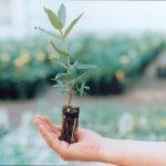 envase sustentable